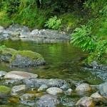 Creek-Side-em