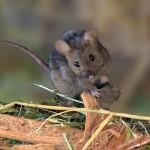 Mouse-em