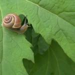 Snail-Jump
